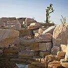 National Arboretum in Canberra/ACT/Australia (10) by Wolf Sverak