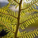 National Arboretum in Canberra/ACT/Australia (12) by Wolf Sverak