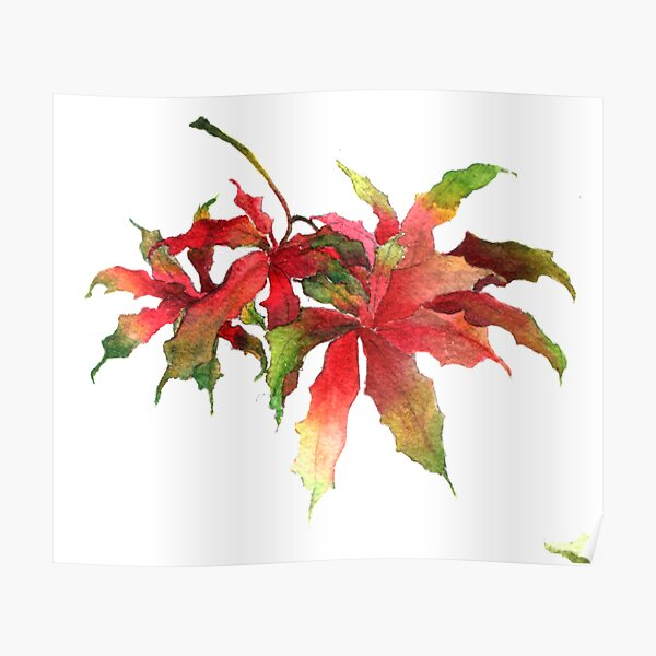 Maple leaves 01 Poster