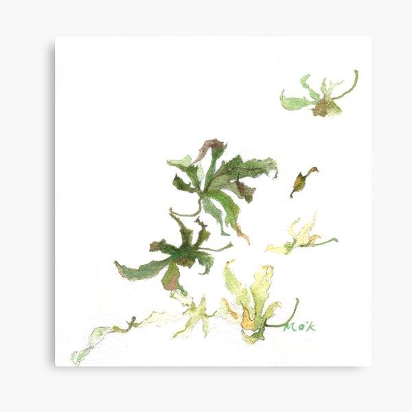 Maple leaves 02 Canvas Print