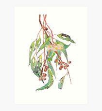 Watercolour eucalyptus tree branch with white flowers & gumnuts. Art Print