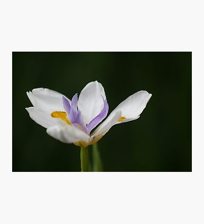 "A Fortnight in Taronga. (""Fortnight Iris"" for challenge) Photographic Print"