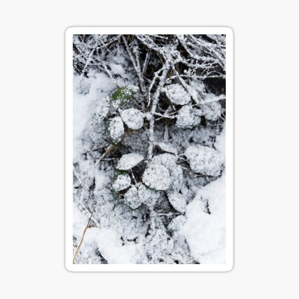 Snow Covered Fern Sticker