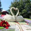The Swans fidelity    by kindangel