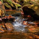 Mountain Stream by Jane Best