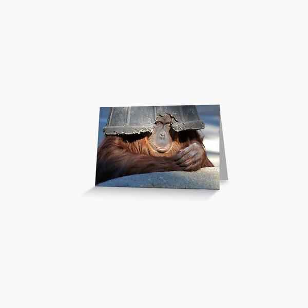 Bornean Orangutan (Pongo pygmaeus) 1 Greeting Card