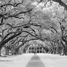 Oak Alley Plantation by Lorraine Creagh