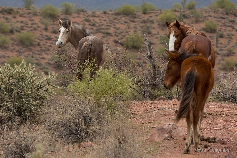 Following the Trail by Sue  Cullumber