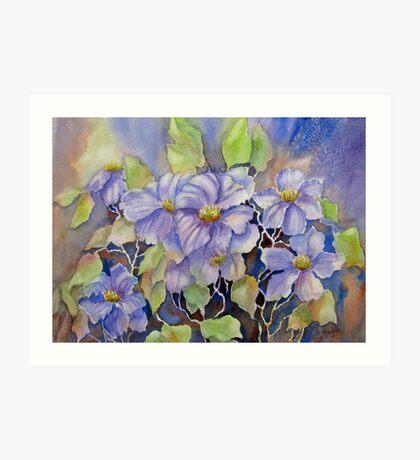 Purple Clematis Art Print