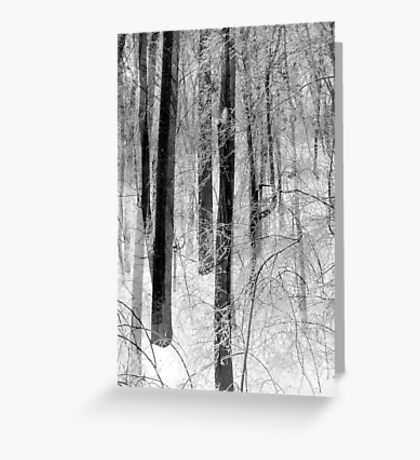 Winter Tapestry Greeting Card
