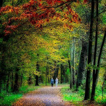 Walking among fall colors by birba