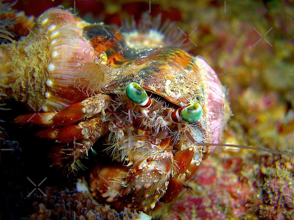decorator crab at arkdive okinawa japan by michael powell - Photo Decorator