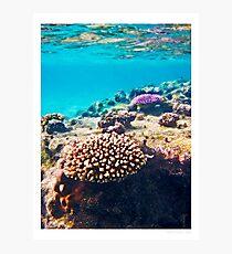 coral colours - rarotonga cook islands Photographic Print
