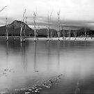 Cove by Kym Howard