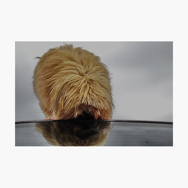 Gizmo's Reflection Photographic Print