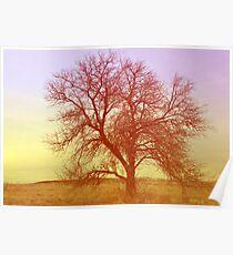 Tree - Saratoga Springs, Utah Poster