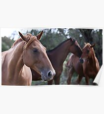 The Moods of Horses Poster