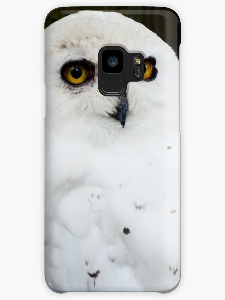 Snowy Owl by ginawaltersdorf