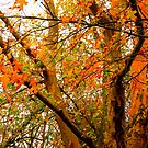autumn yellow and orange by TessAndre