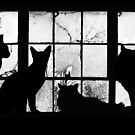 Four Cats In My Window by tastypaper