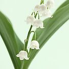 lily of the valley by OldaSimek