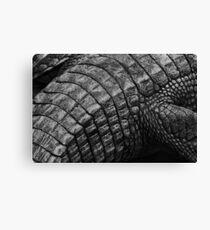 Gator Back Canvas Print