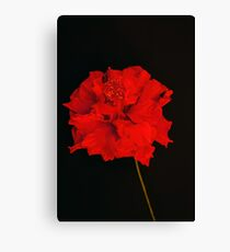 Red Hibiscus 2 Canvas Print
