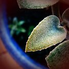 LoveLeaf by LouJay