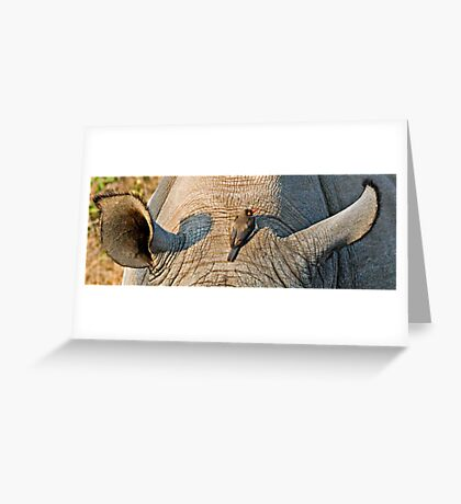 Rhinos Do Have Something Between Their Ears Greeting Card