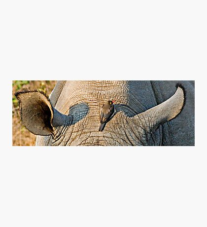 Rhinos Do Have Something Between Their Ears Photographic Print