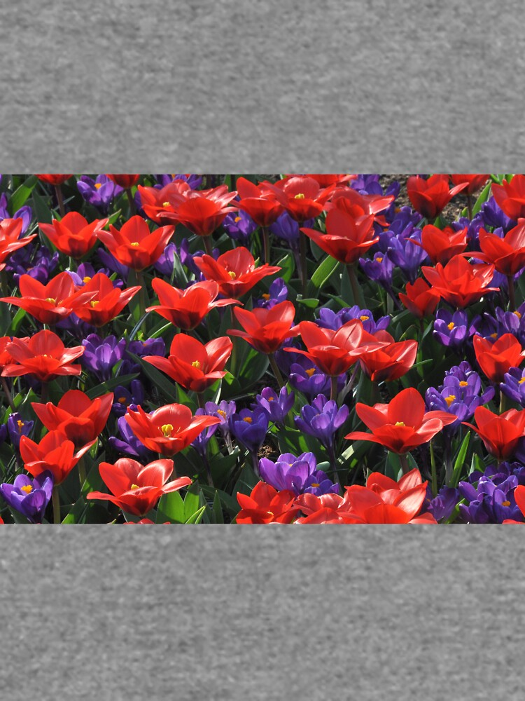Red and purple by GreenNote