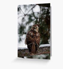 Prairie Falcon 2 Greeting Card