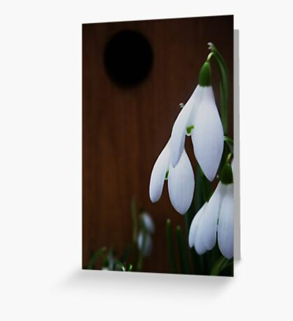 Snowdrops : First signs of Spring Greeting Card