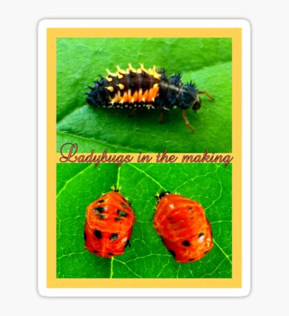 Ladybugs in the making Sticker