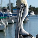 Pelican 2 by doctorphoto