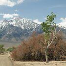 Sierra Nevada Range behind Manzanar by chibiphoto