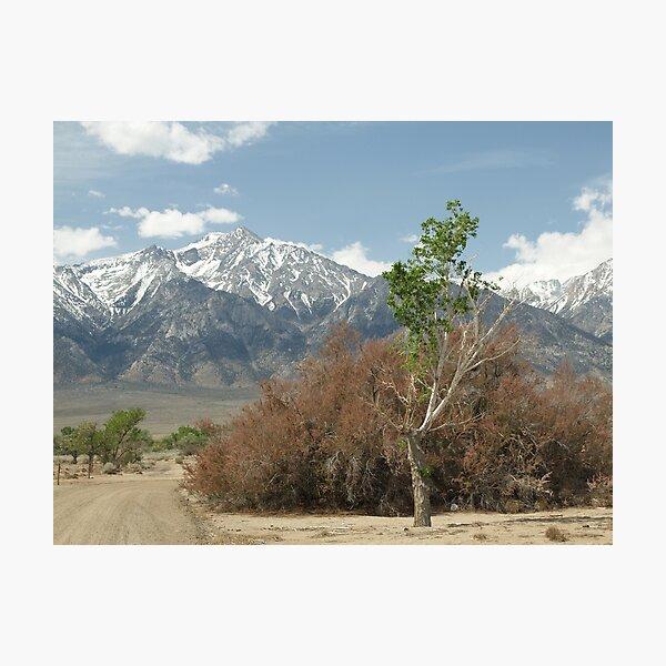 Sierra Nevada Range behind Manzanar Photographic Print