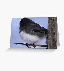 Slate-colored Junco Greeting Card