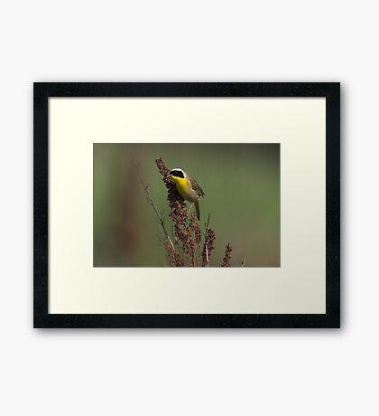 Common Yellowthroat Framed Print