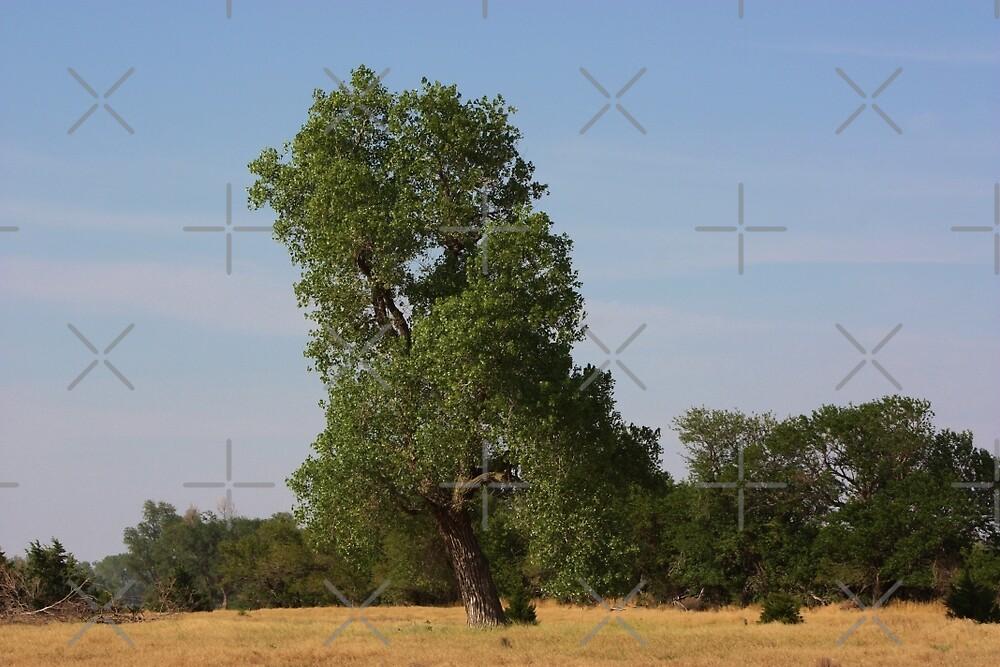 Kansas Country  Tree in a Pasture by ROBERTDBROZEK