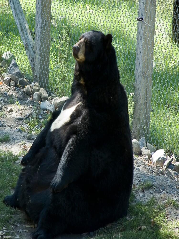 Gracioso oso gordo de R23S