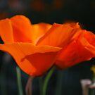 A poppy song by Lozzar Flowers & Art
