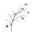 Spiders are always looking for warmer places to sleep by Amanda-Jane Snelling