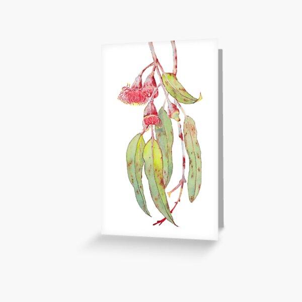 Flowering Silver Princess Eucalyptus Watercolour Greeting Card