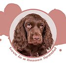Love is a Sussex Spaniel by SMiddlebrook