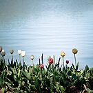 tulips by the water by Amanda-Jane Snelling