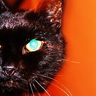 On The Prowl by J J  Everson
