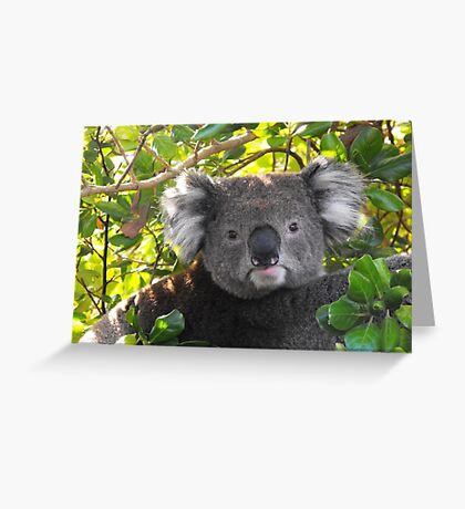 Koala on Otway (Can't you see I am busy?) Greeting Card
