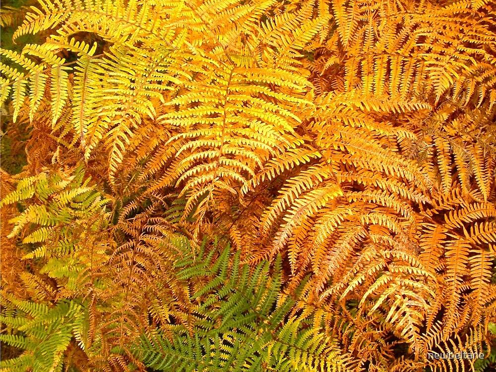 Autumn ferns by newbeltane