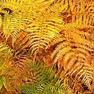 Autumn ferns by newbeltane